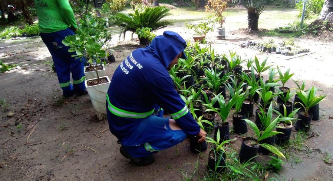 Reeducandos ajudam no trabalho na sementeira