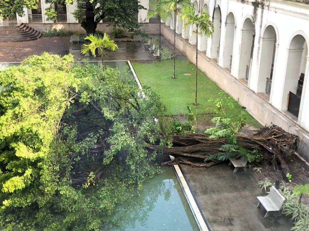 Árvore do Imip cai em dia de fortes chuvas no Recife