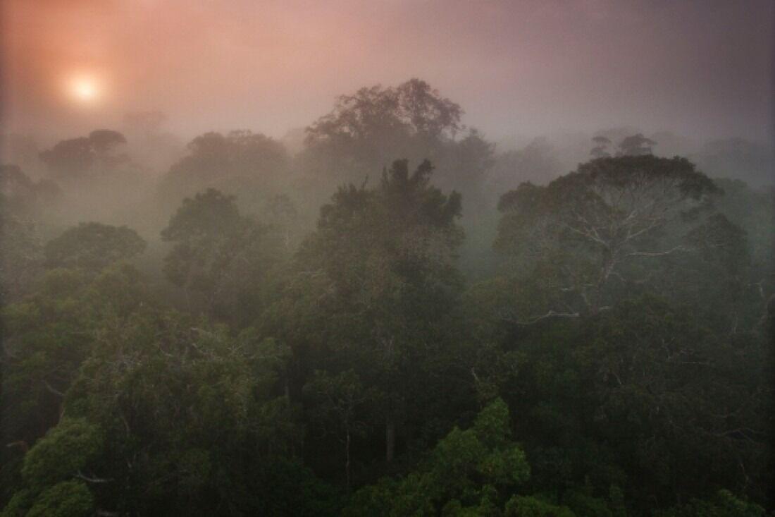 Simulações realizadas em supercomputador do Inpe mostram que efeito direto do aumento de gás carbônico sobre a floresta causaria redução de chuvas equivalente ou até superior à provocada pela substituição total das árvores por pastagens