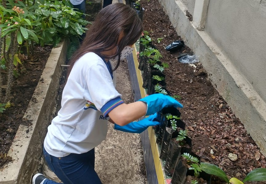 Estudantes distribuem mudas de pau-brasil