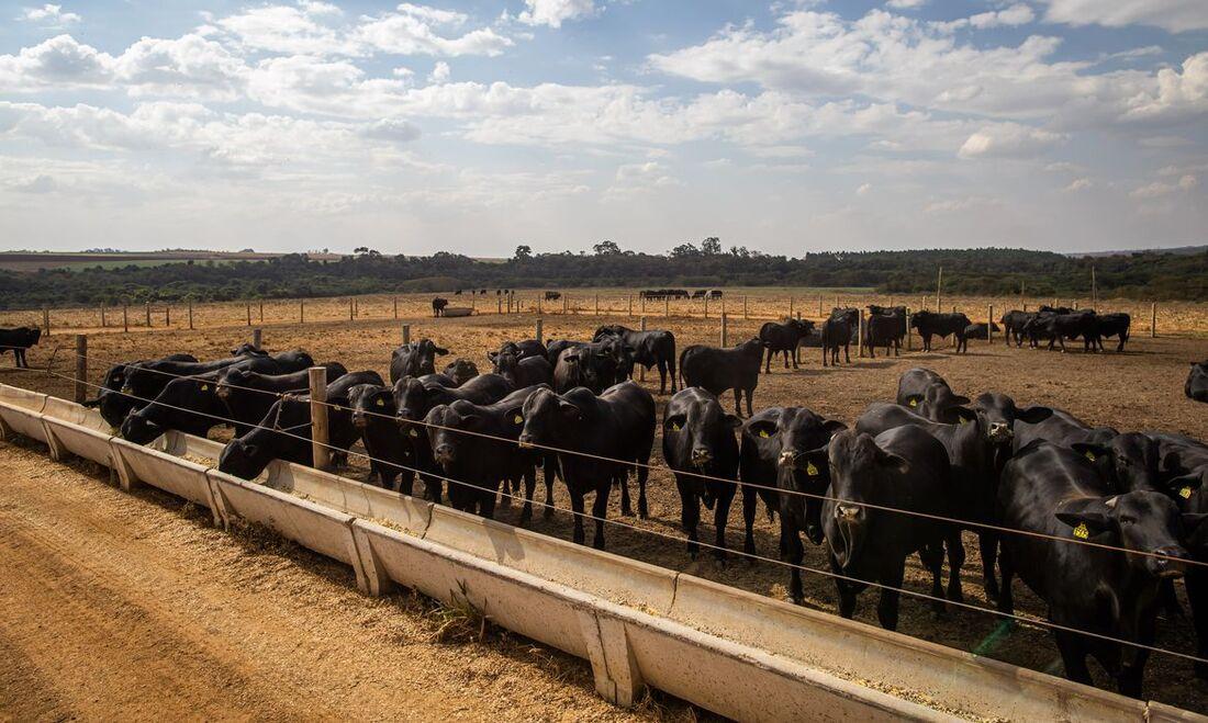 Produção bovina