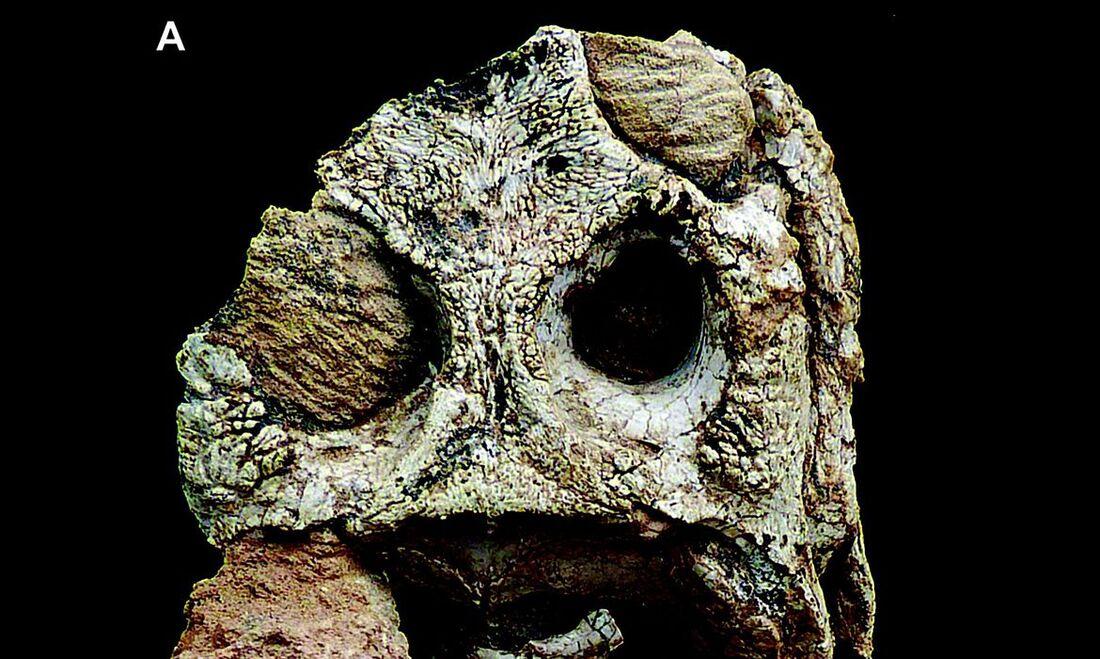 Os achados no município de Álvares Machado, no sudoeste de São Paulo, incluem dentes, ossos do crânio e pós-crânio provenientes das rochas da Formação Araçatuba (Grupo Bauru)