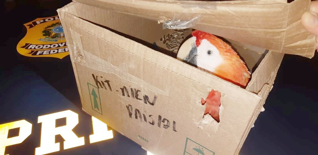 Se condenado, motorista que transportava ave pode pegar detenção de seis meses a um ano, além de pagar multa