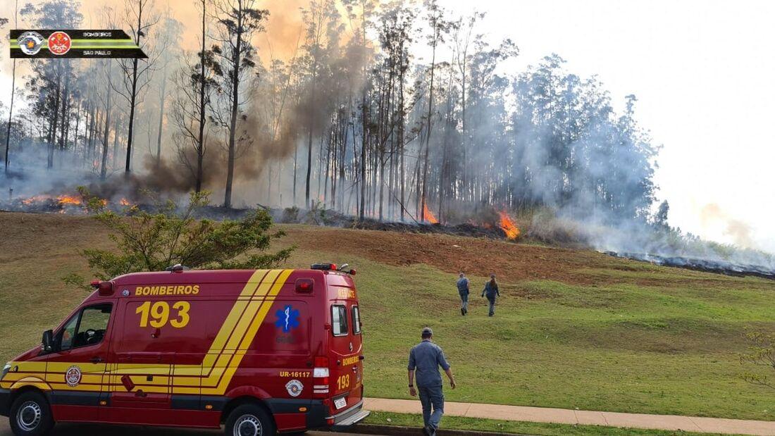 Aeronave caiu em área de mata em SP