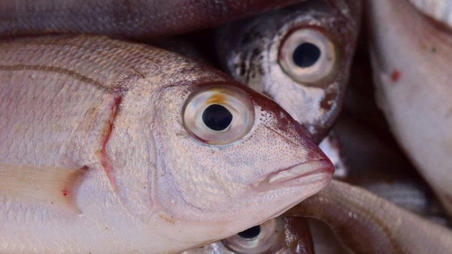 Peixe Arabaiana