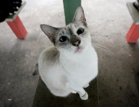 Ao longo de duas semanas, 31 gatos foram envenenados na avenida Beira Rio