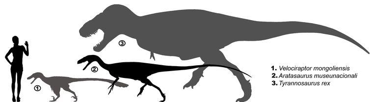Aratasaurus museunacionali era um animal de porte médio