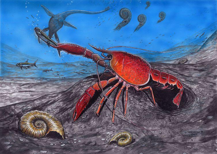 Desenho de um lagostim, que viveu há cerca de 75 milhões de anos