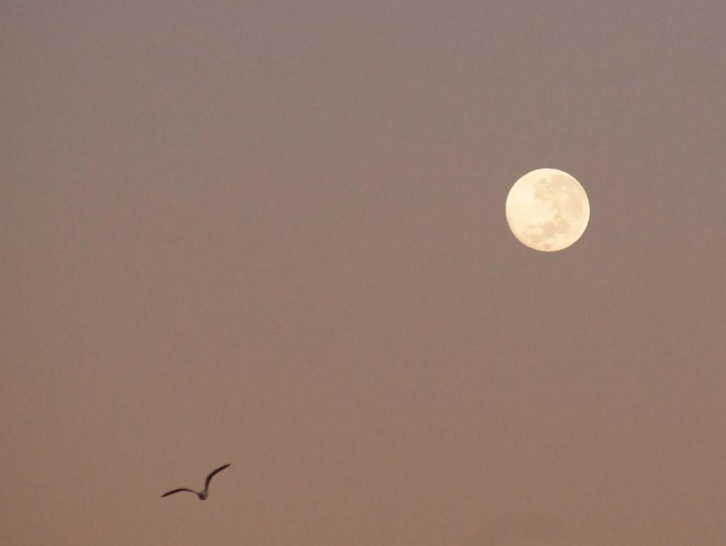 Lua e pássaro, por Solange.