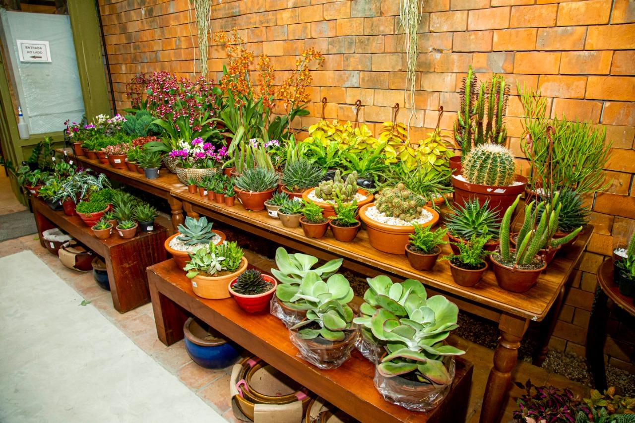 Na Botânica, as suculentas e cactos são opções de plantas ideias para os 'atarefados'