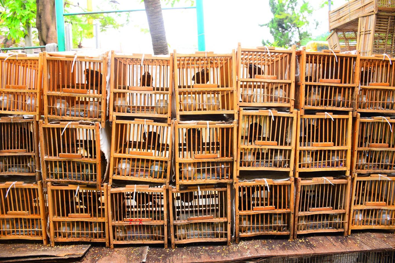 Venda ilegal de aves