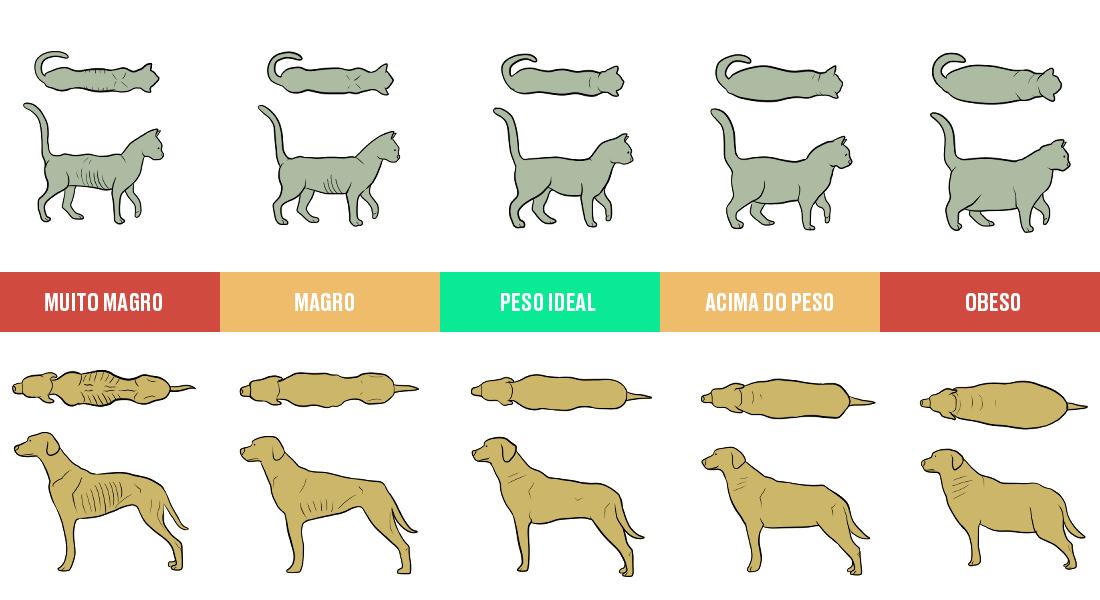 Escore corporal de cães e gatos