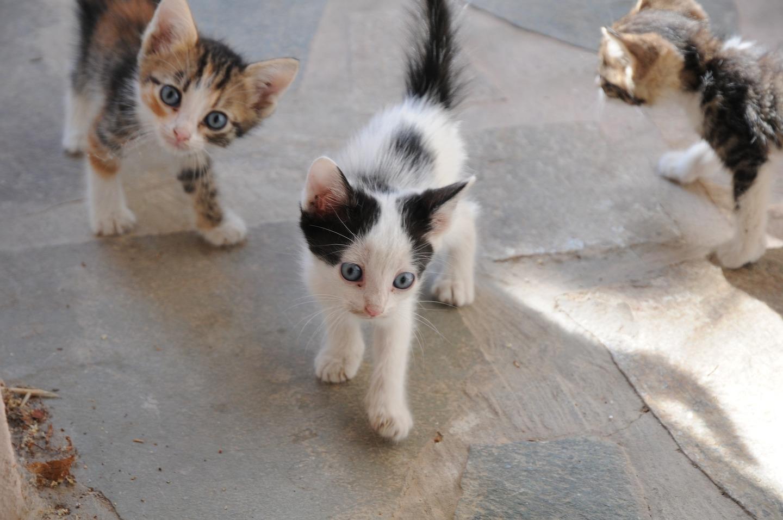 Gatos na rua