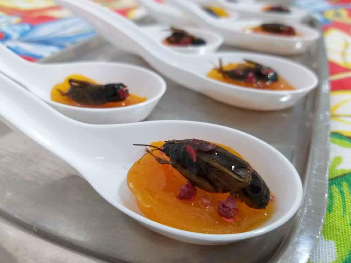 Bugs ancestral: damasco, pimenta rosa, grilo e mel