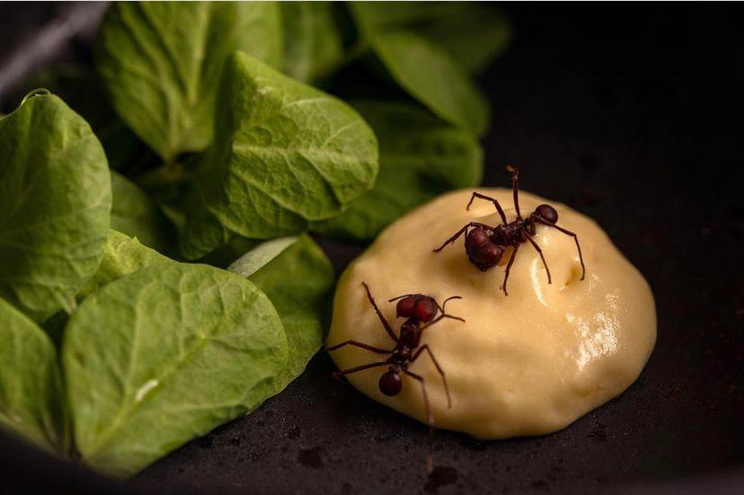 No restaurante Banzeiro, em Manaus e São Paulo, formiga saúva traz sabor amazônico