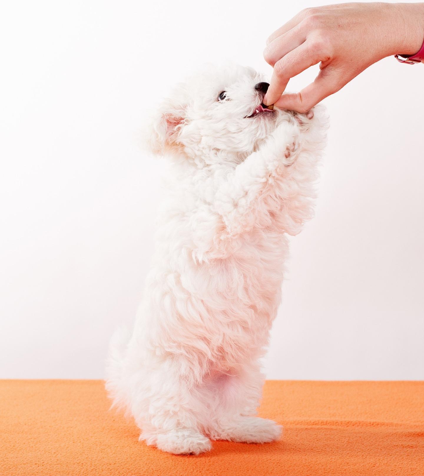 Cachorro fazendo exercício