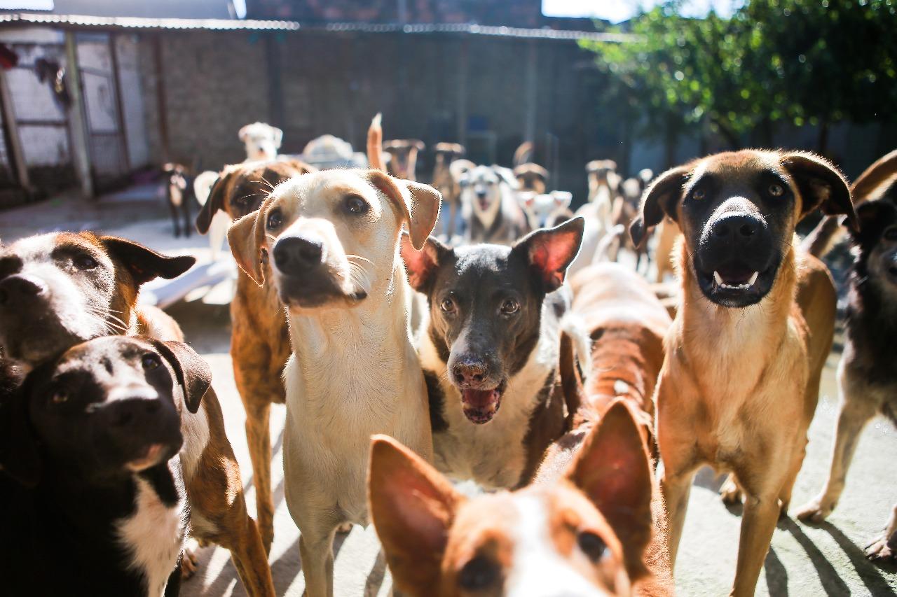 Cães do Abrigo Seu Alberto