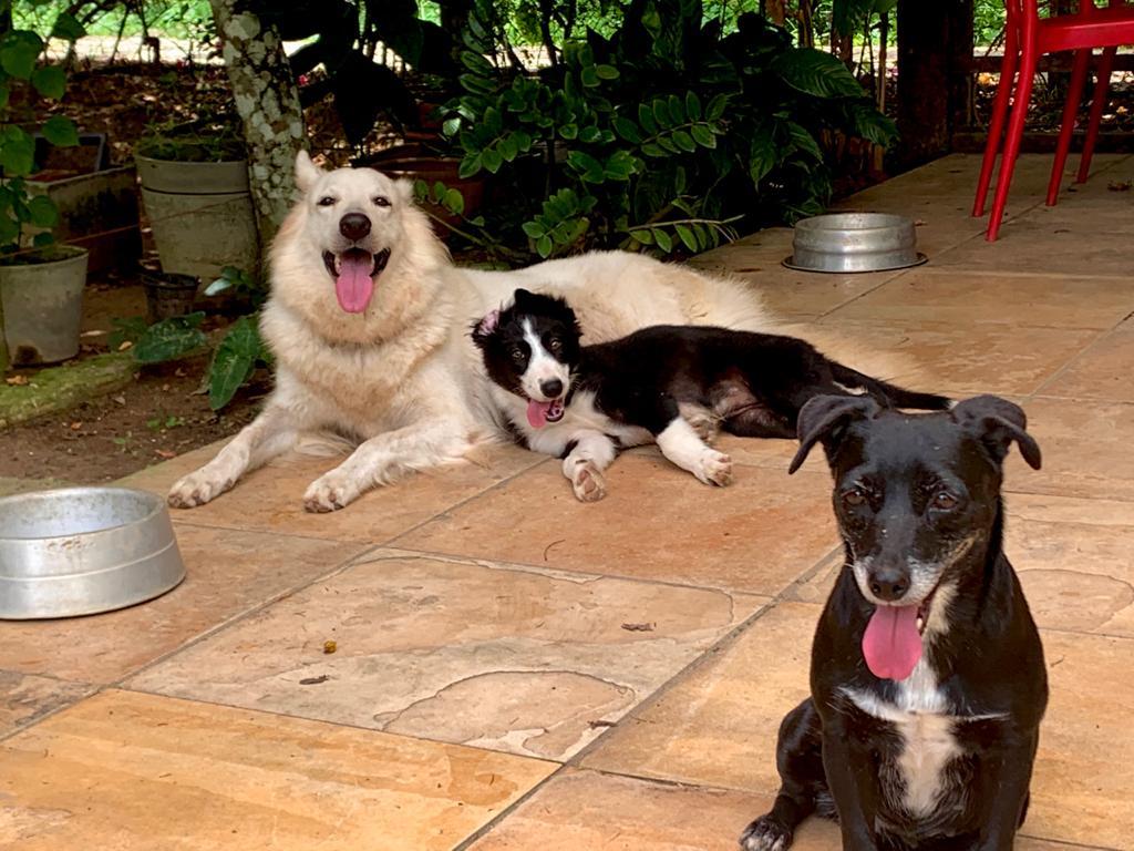 Da direita para a esquerda: Harley, Nala e pretinha, em 2018.