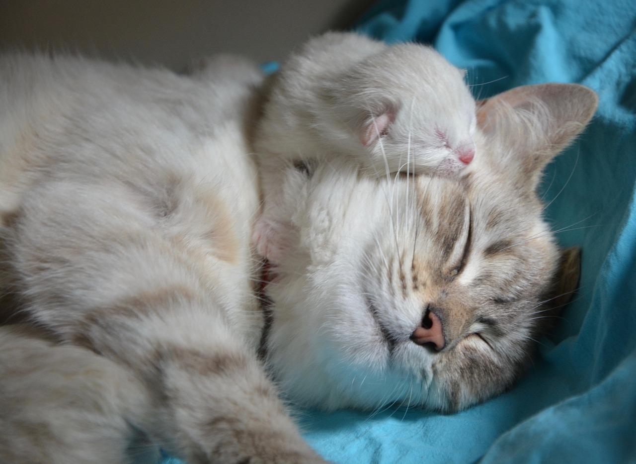 Gato com filhote